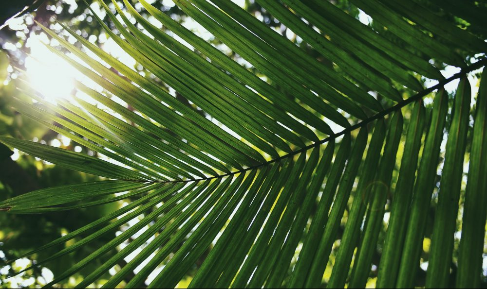 God's Victory March – Palm Sunday : March 28