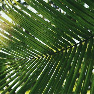 God's Victory March – Palm Sunday : March 28